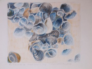shells, sand drawing